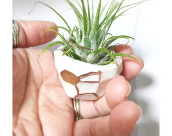 Geo Tiny Planter Petite Small Perfect Air Plants or Baby Plants Pot Container MADE TO ORDER