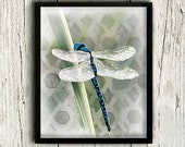 Dragonfly Art Print, Nautical Decor, Dragonfly Wall Art, Insect Art, Insect Print, Illustration, Home Decor  / 8x10in