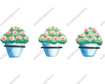 Three Blue Pots with Roses Watercolor Art Print