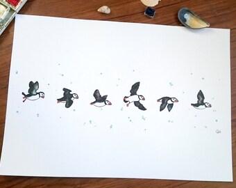 Puffins in flight - Print