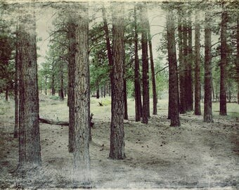 INTO THE WOODS - Print ***Instant Digital Download***