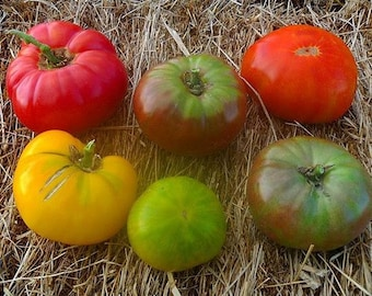 Mixed Heirloom Colorful Beefsteak Tomato, 20+ seeds