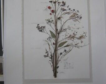 Herbarium of dried natural flowers