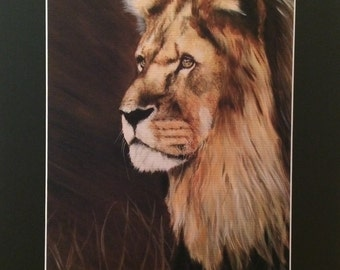 Lion - Dusk - Limited Edition Mounted A3 artist original print