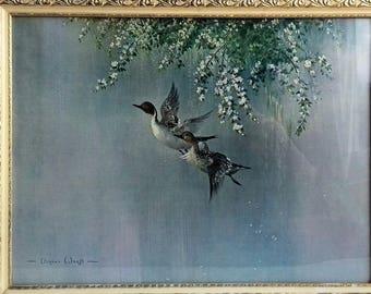 Lovely Vernon Ward 1950's /1960's Print of Flying Ducks