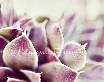 Purple succulent photo, Flower photography, nature photography, succulent, green, purple, cactus, home decor, botanical, succulent photo