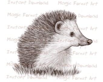 Hedgehog Children's art instant download. Printable art. Nursery art poster. Digital pencil drawing. Clipart graphic. Coloring sheet.
