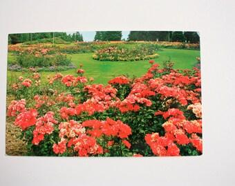 Flowers in Stanley Park Vancouver Postcard / British Columbia Postcard / Gardens postcard