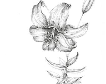 White Tiger Lilies Etsy