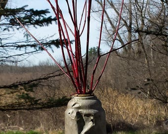 Old Can with Branches Collectible Metal Can with Red Dogwood Branches Instant Arrangement Rustic Decor