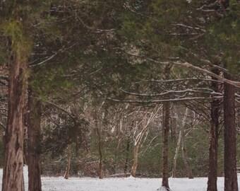Winter Snow Forest Road Digital Backdrop