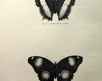 Beautiful original antique butterfly print, 1860 vintage lepidoptera engraving, entomology plate illustration, insects natural history.