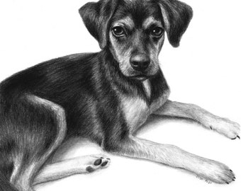 Custom Dog Portrait, Dog Drawing, Pet Portrait, Charcoal Drawing, Personalized Animal Portrait, Original Sketch, Drawing From Your Photo