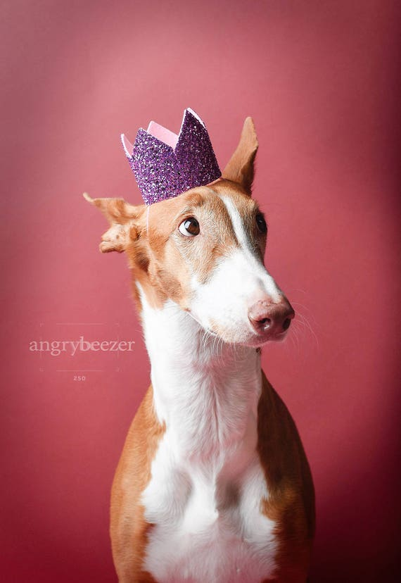 Pet Birthday Crown || Animal Party Prop || Birthday Party Photo Prop || Dog Cat Pig Birthday Party Hat Crown