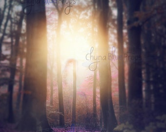 Enchanted Forest Digital Background (instant download) Fairytale