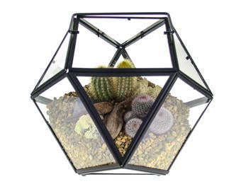 Large Cactus Terrarium Kit, Geometric Design in Metal and Glass featuring Living Cacti | Home Accessory Gift Ideas