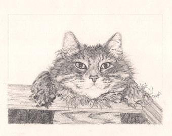 Pencil Drawing/Custom Drawing/Realistic Drawing