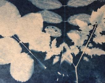 Cyanotype Print - Snow Leaves