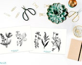 Flowers and Plants Stickers (1,2,3,4)