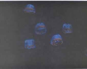 Jellyfish - photographic postcard