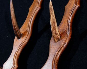 Antler coat hooks (pair), French / antlers coat rack or gun rack on oak base, 1960s 1970s