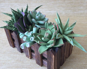 Garden of succulents in wooden planters