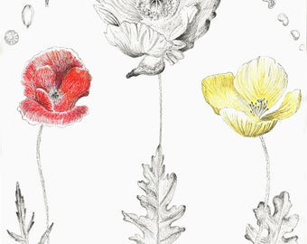 Botanical prints Botanical fine art print Poppies Design