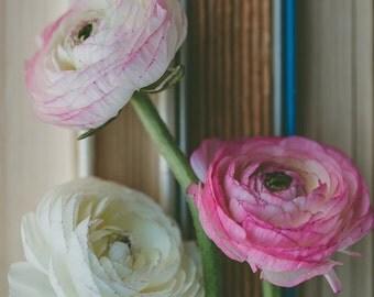 Fine Art Photo, Ranunculus Print, Flower Photograph, Pink, White, Books, Book Art, Flower Art, Home Decor, Botanical, Floral, Still Life Art