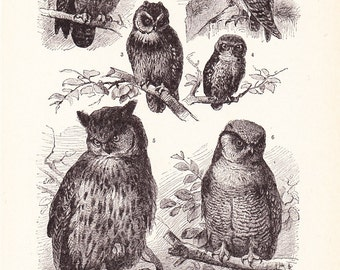 1920s Bird Print - Owls - Vintage Antique Home Decor Book Plate Art Illustration for Framing 95 Years Old