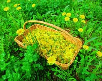 Dandelions, Dried Dandelion Flowers, NH Grown Dried Herbs, Herbal Medicine Beauty Supply Recipe Ingredient, 2017 Wildcrafted Harvest Flowers