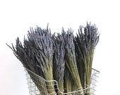 Organic  Dried Lavender 20 bunches