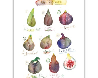 Fig print, Watercolor fig painting, Fruit poster, Kitchen decor, Purple wall art, Fig illustration, Botanical art, Fig chart, Food artwork