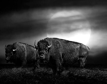 American Buffalo, Super, Moon Rise, Two, Bison, Western Prairie, Black and White, Sepia, Fine Art, Western, Wildlife, Landscape, Photograph