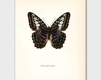 "Vintage Butterfly Print, 1960s Wall Art ""The Clipper Admiral"" No. 98-1"