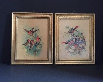 Florentia Framed Wooden Bird Plaques