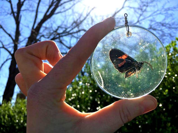 Preserved Genuine Butterfly Specimen *naturally passed* enclosed within a Large Round Resin Pendant, Bronze Necklace Chain.