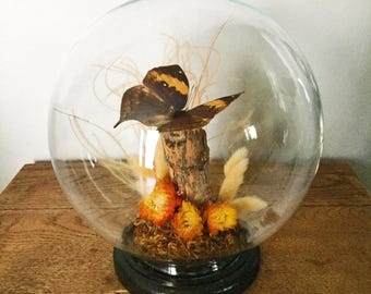Vintage Taxidermy Butterfly in Round Cloche / Taxidermy Mounted Butterfly