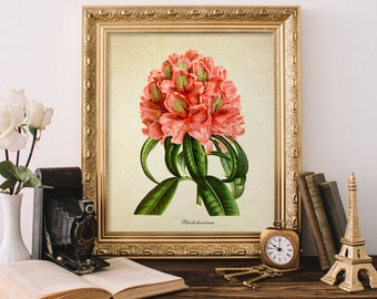 Botanical Print, Pink Rhododendron Print, Home Decor, Pink Rhododendron Art, Floral Botanical Print, Pink Rhododendron Illustration FL065