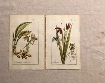 1790 Original JOHANNES ZORN German Botanical Prints--Resurrection Plant & Stinking Iris