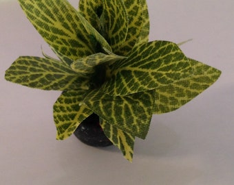 Dollhouse Miniature - Green Plant