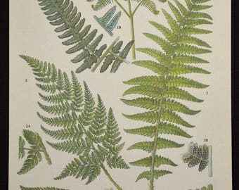 Fern Print Ferns Wall Decor Art Plant Print Nature Print