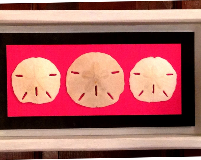 Sanddollar Shadow Box • Bright Pink Mat with Sand Dollars • Home Decor • Distressed Wood Frame • Crafts by the Sea