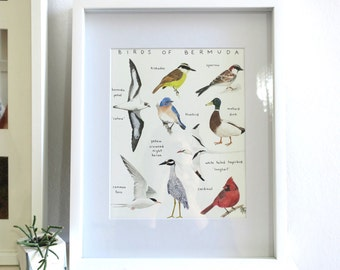 Birds of Bermuda Print - 8 x 10 inches - Giclee Print on Canson Aquarelle Rag