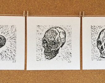 Stages of Skulls