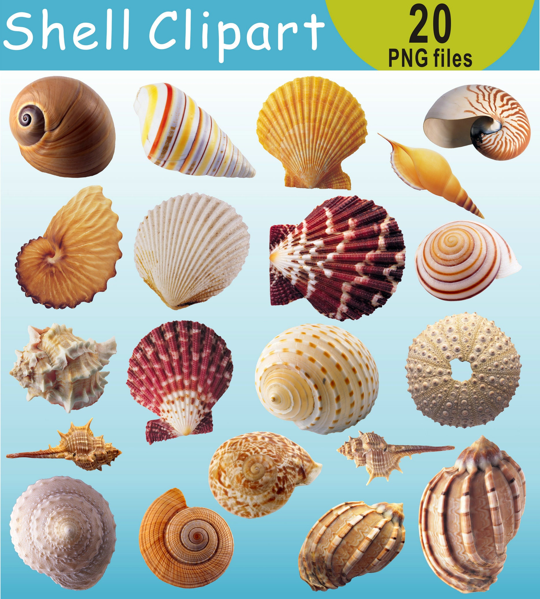 Seashells clip art images watercolor hand painted Under the sea