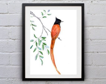 paradise flycatcher watercolor painting print bird inspiration wall art decor orange brown bird poster bird decoration bird print nursery