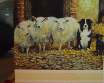 Black Sheep of the Family   Birthday Card