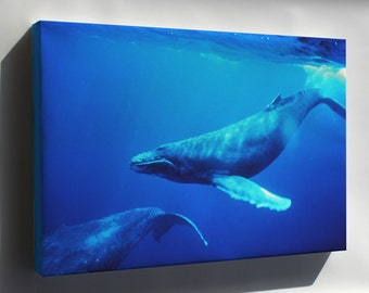 Canvas 24x36; Humpback Whale Underwater Shot