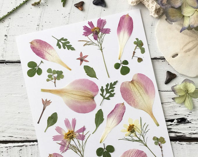 Real Pressed Flowers:  Variety of Flowers & Leaves > Natural - Dye Free - Biodegradable - ECO Friendly