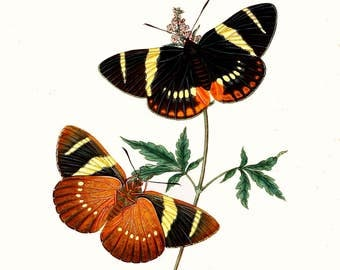 An Epitome of the Natural History of the Insects of India c1800.